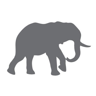 Elephants Under the Carpet Workshop – to identify the key issues that are holding your team back